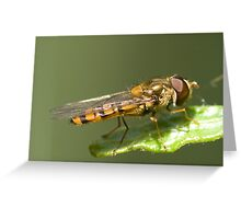 Hoverfly Greeting Card