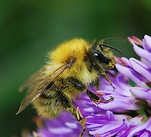 Collecting pollen by relayer51