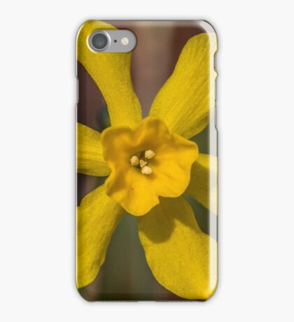 Bright Yellow Daffodil Flower iPhone Case/Skin