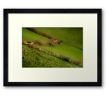 The Hedges Of Zorro Framed Print