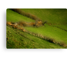 The Hedges Of Zorro Canvas Print