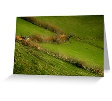 The Hedges Of Zorro Greeting Card