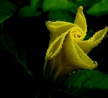 Yellow Bud by Tanya Keefe