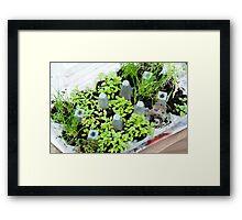 Herb Box Framed Print