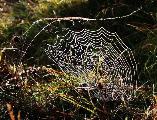 Spiders web, early morning by PeterBez