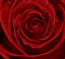 rose red Sticker