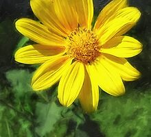 Large Yellow Wildflowers 1 by Christopher Johnson