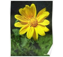 Large Yellow Wildflowers 1 Poster
