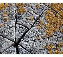 Lichens on Rings Photographic Print