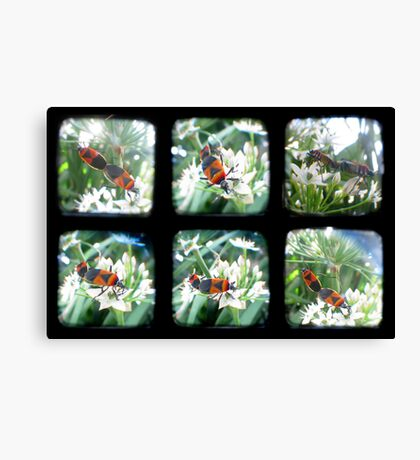 Happy Bugs Polyptych - TTV Canvas Print