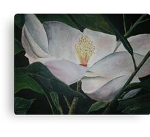 magnolia flower oil painting Canvas Print