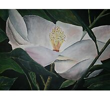 magnolia flower oil painting Photographic Print