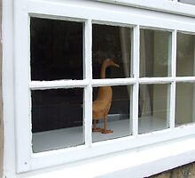 How Much Is That Ducky In The Window? by Matt Roberts
