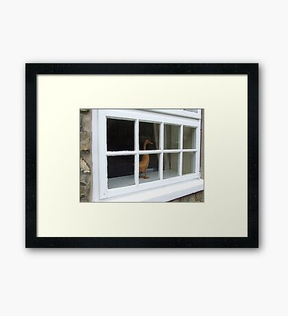 How Much Is That Ducky In The Window? Framed Print