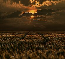 Field of Gold by Jo-PinX