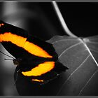 butterfly by leabrigitte69