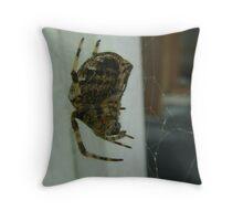 Garden spider, Araneus diadematus (macro) Throw Pillow