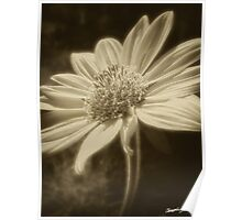Large Yellow Wildflowers 2 Antiqued Poster