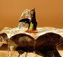 RUFOUS HUMMINGBIRD IN FOUNTAIN by RoseMarie747