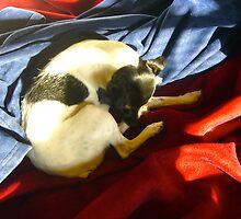 Sleepy Dog Swirl by Jonathan  Green