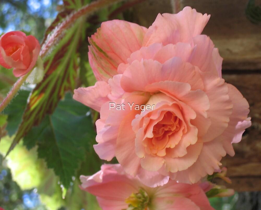 Light Pink Begonia by Pat Yager