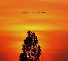 Light gives life to life. by Rudywalsh
