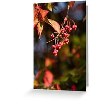 Berries of the Spindle tree Greeting Card