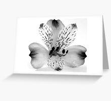 Alstromeria Greeting Card