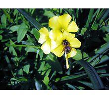 Sour Bee Photographic Print