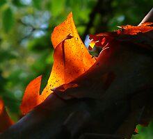 Flaming Tree Bark by Susie Peek
