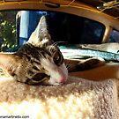 Pango sleeping in the van by Elena Martinello