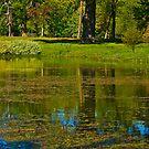Pond View by Trevor Kersley