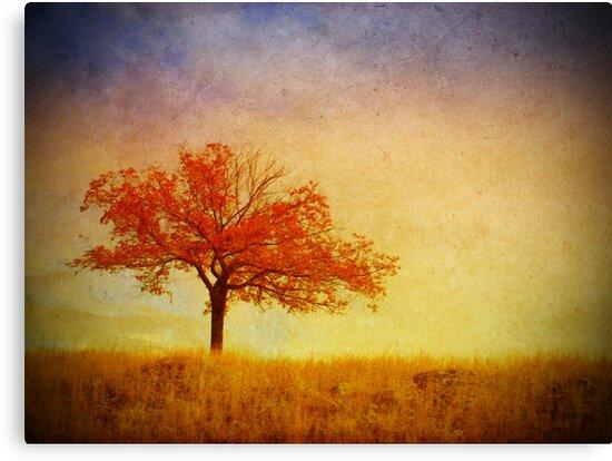 The Wednesday Tree by Tara  Turner