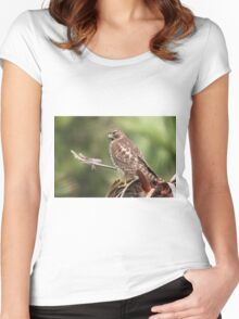 Red-shouldered Hawk  Women's Fitted Scoop T-Shirt