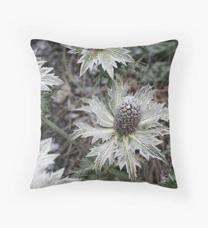 Eryngium giganteum Throw Pillow