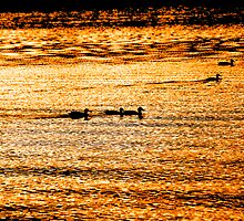 Sunset Ducks by Stan Wojtaszek