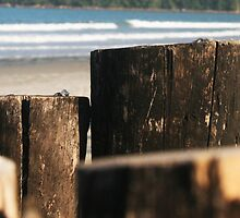 rustic wood border on the beach by momarch