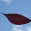 Fall by cebrfa