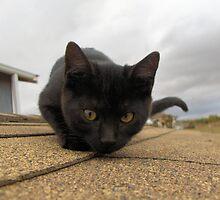 cat on a cool shingled roof by Anita Konopka