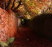 Autumn Path by Jonty Barron