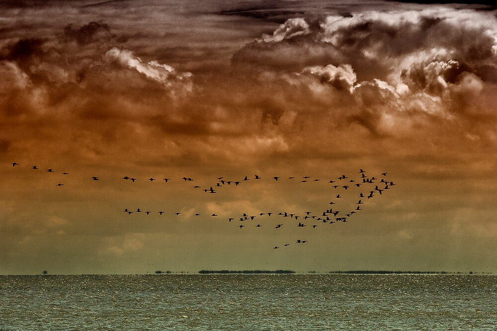flying birds by nordvil