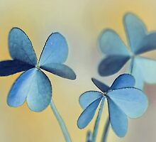 Tiny Butterflies of Hope by tanjica