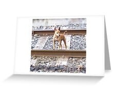 """""""Train Spotter."""" Greeting Card"""