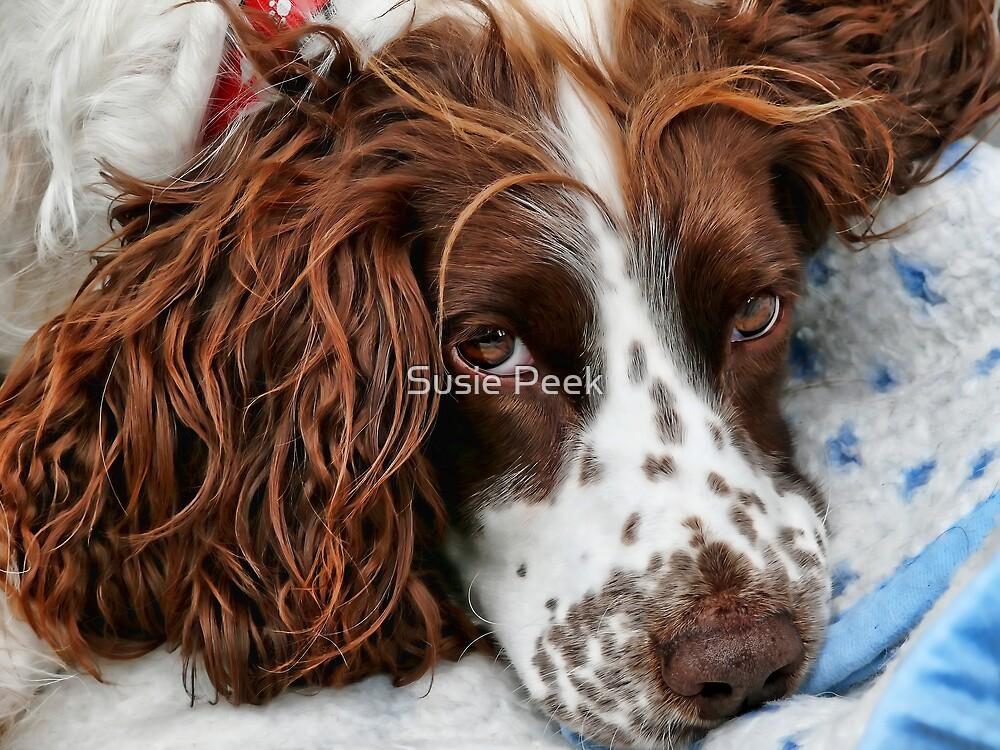 Snuggled Poppy by Susie Peek