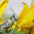 Grasshopper by Jeff Ashworth & Pat DeLeenheer