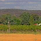 oakover farm wines  by Elliot62