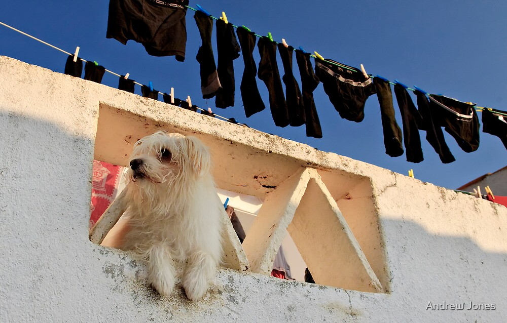 defending the washing, Marvao,  Alto Alentejo, Portugal by Andrew Jones