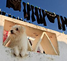 defending the washing, Marvao,  Alto Alentejo, Portugal by Andrew Jones