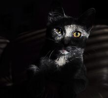 Jasper's evening repose: My 1st Red Bubble Feature Page image! by Lenny La Rue, IPA