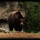 Brown Bear by Mari  Wirta